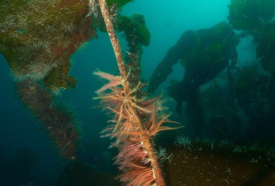 Sea Change Wester Ross's response to Marine Biopolymers Ltd Wild Seaweed Harvesting Scoping Report